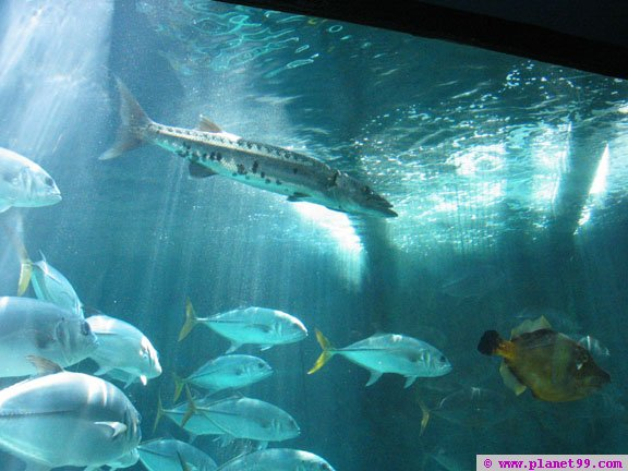 Bermuda Aquarium and Zoo , Flatts, Bermuda