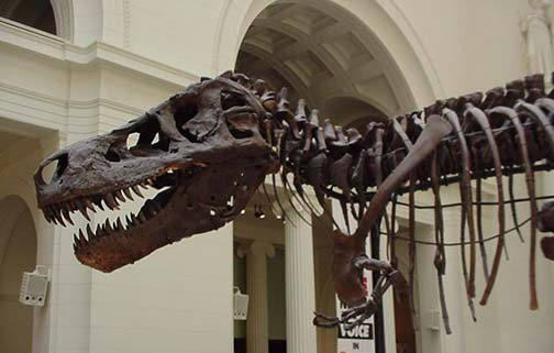 Field Museum of Natural History , Chicago